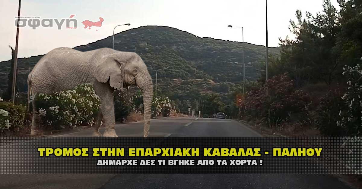 xorta paraliakh kavala mouriadhs - Τρόμος στην επαρχιακή οδό Καβάλας - Παληού. ΒΙΝΤΕΟ ΣΟΚ !